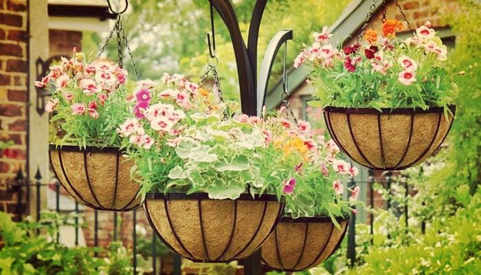 Flores colgantes de exterior