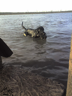 North Texas Duck Hunting|North Texas Dog Trainers|North Texas Duck Hunts