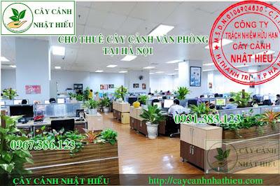 Cho thuê cây cảnh văn phòng tại Hà Nội