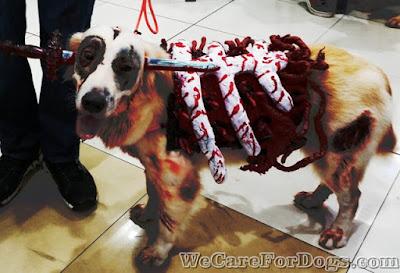 dog halloween costume - mhershey - dog zombie