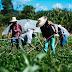 Desarrollar la agricultura familiar y orgánica (2)