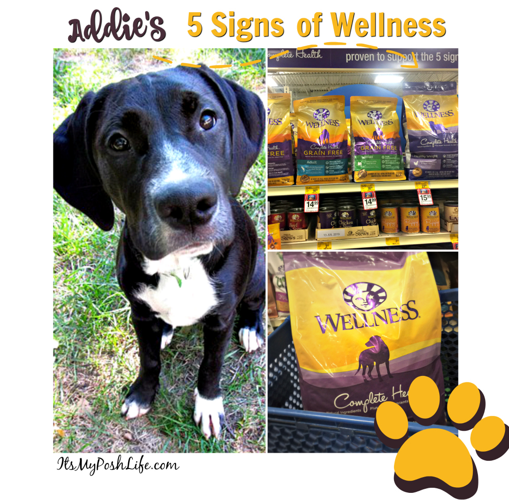 Addies's 5 Signs of Wellness #WellnessPet @Wellness @PetSmart