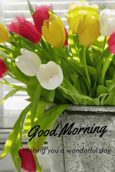 good morning with flowers pot