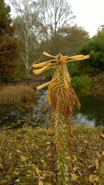 Tina's Allsorts, Hillier Gardens