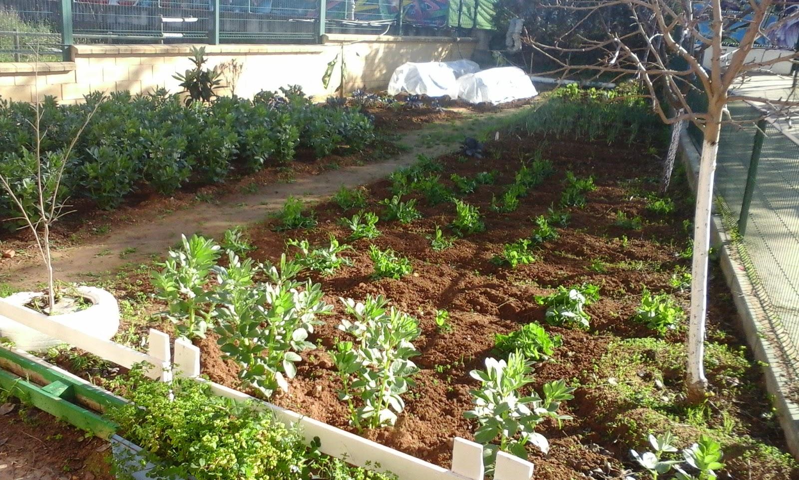 C e i p nuestra se ora de bel n huerto escolar for Plantas beneficiosas para el huerto