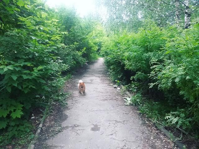 Воскресенск - дорожка, которая раньше находилась на территории школы №1, а теперь осталась бесхозной.
