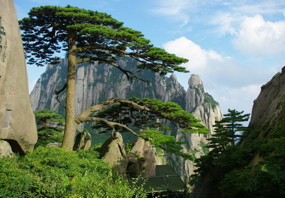 World S Most Famous And Amazing Trees Strange Sounds