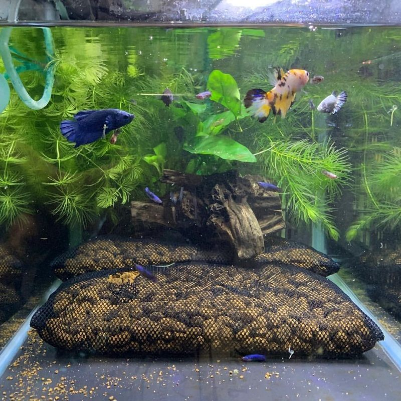 The One Thing to Do for Betta Fish Tank Filter