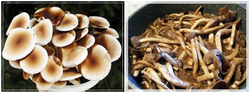 jaimees welt pilze selber z chten jaimee testet ein weiteres pilzset von pilzm nnchen. Black Bedroom Furniture Sets. Home Design Ideas