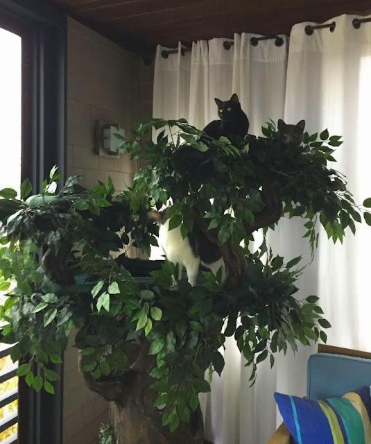 Decorative Cat Trees