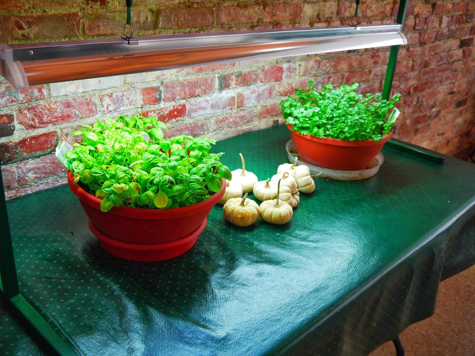 Food Pantries In Jamestown Ny