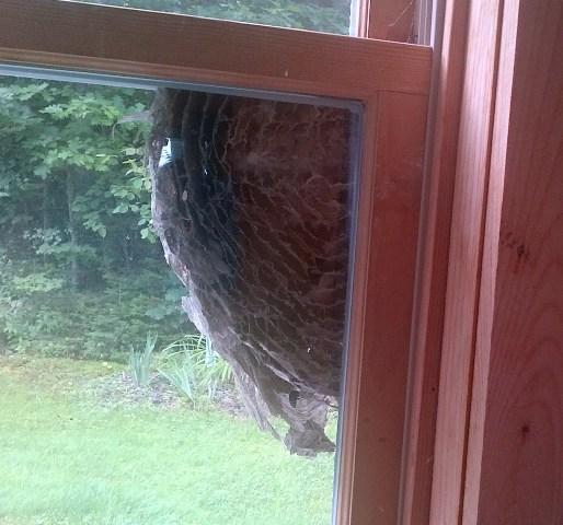 Quilt, Knit, Run, Sew: An Inside View Of A Hornet's Nest