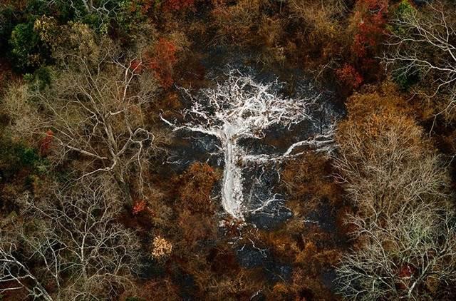 Ashes of a Tree Near the Gorohoui Kongoli Mountains, Ivory Coast