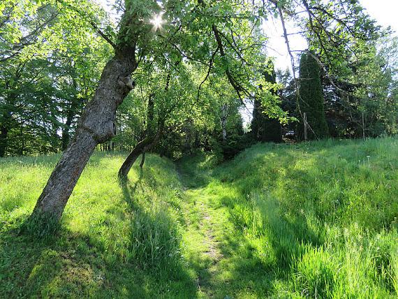 Ścieżka na Capią Górę