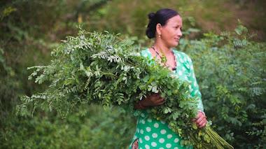 Plantas tintóreas: los colores del Himalaya