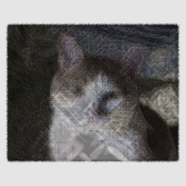 A cat photo in etching looks.