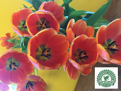 Rainforest Alliance Tulips