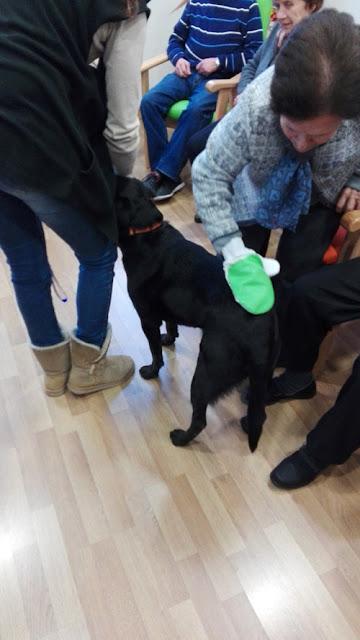 Terapias con animales para mayores en Granada