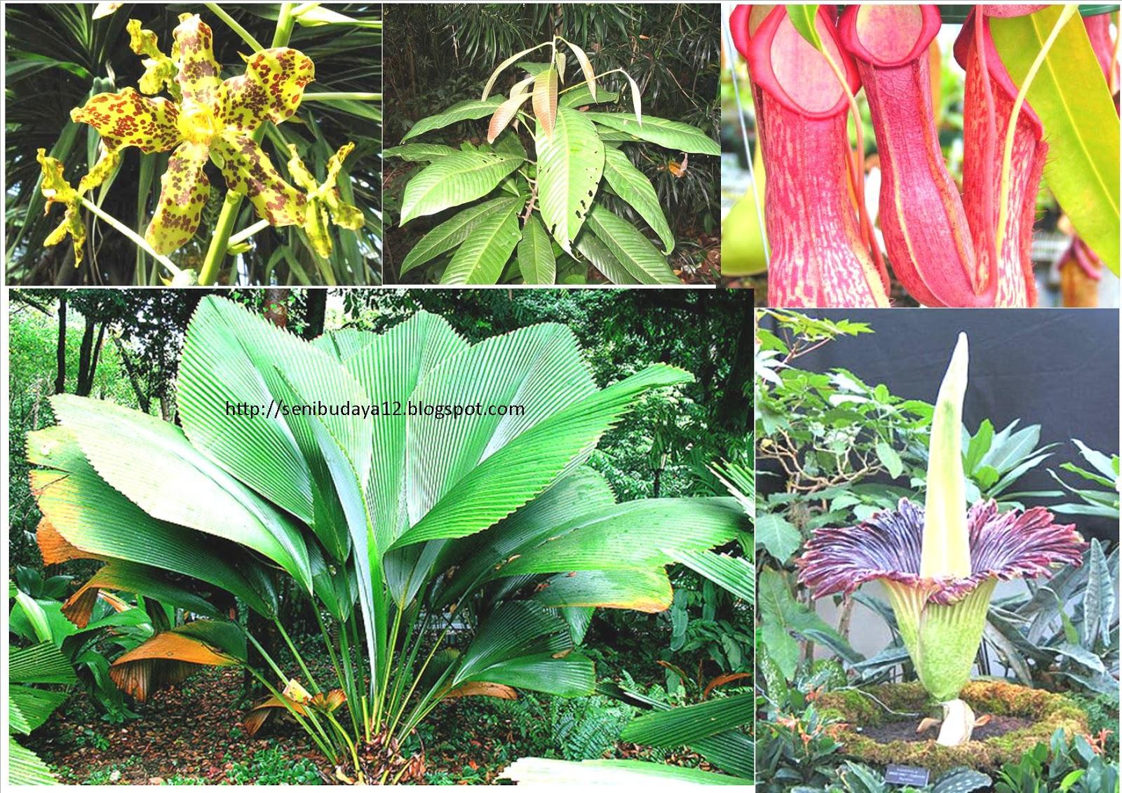 930 Koleksi Gambar Hewan Dan Tumbuhan Yang Mendekati Kepunahan Terbaru