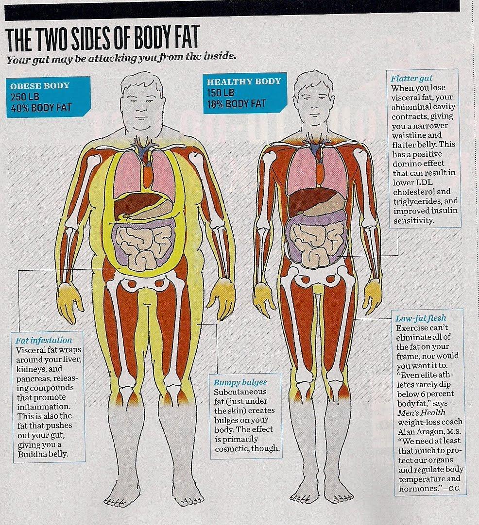 Visceral Fat Men 24
