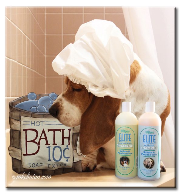 Basset in shower cap with dog shampoos and hot bath .10 sign