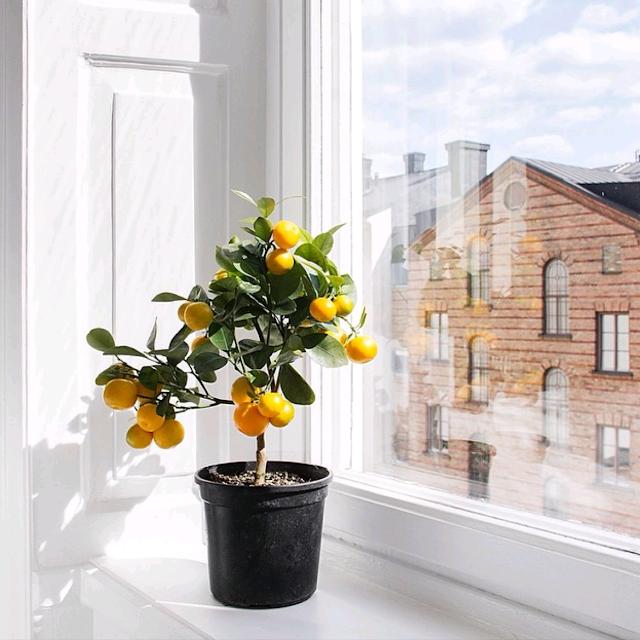 primavera-plantas-flores-janela-decoracao