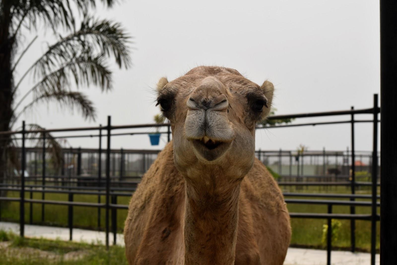 Omu Resort Zoo