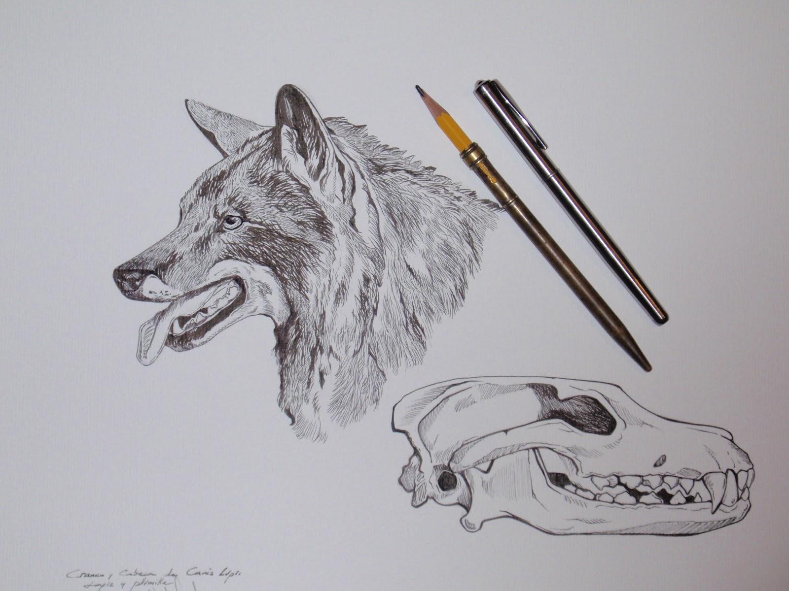 Nor Martin Ilustracion Un Dibujo A Plumilla Sobre Cráneo Y Detalle