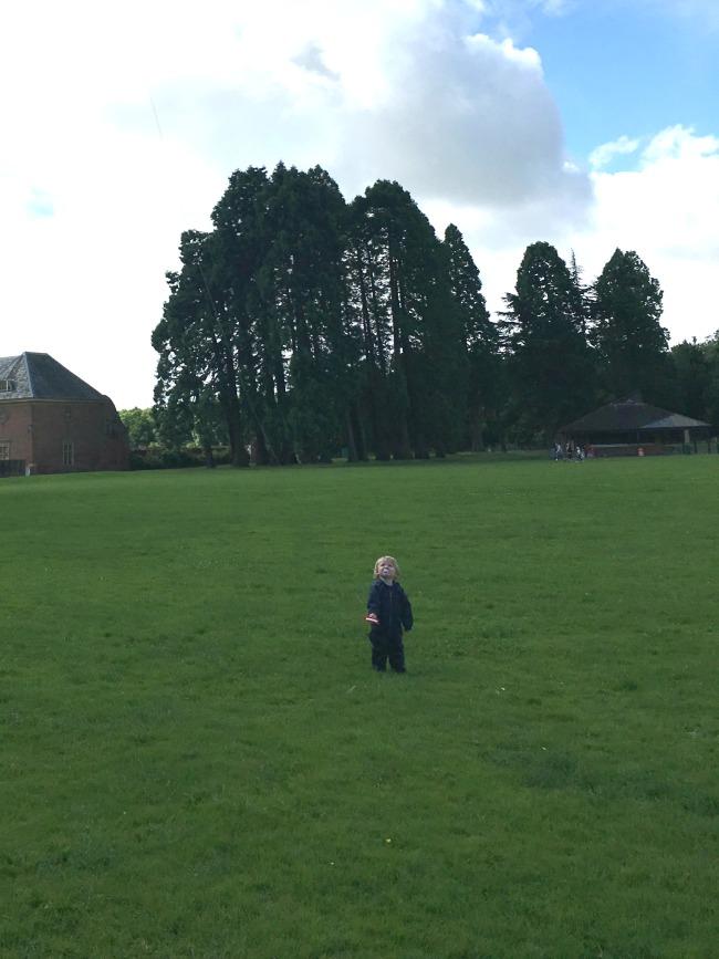 toddler-looking-at-kit-flying