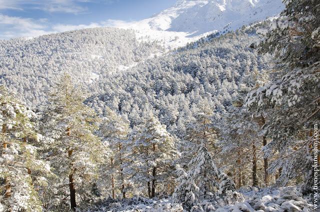 Sierra de Guadarrama nieve Madrid ruta raquetas nieve