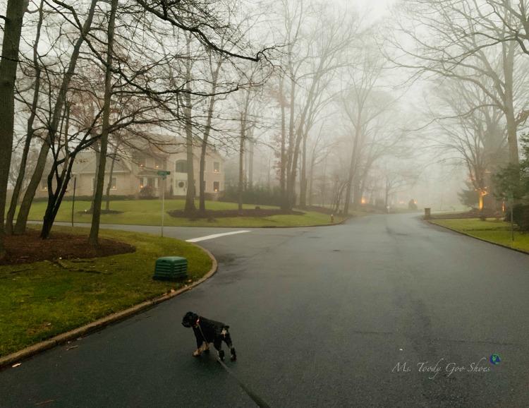 January 2019 Photo Diary | Ms. Toody Goo Shoes