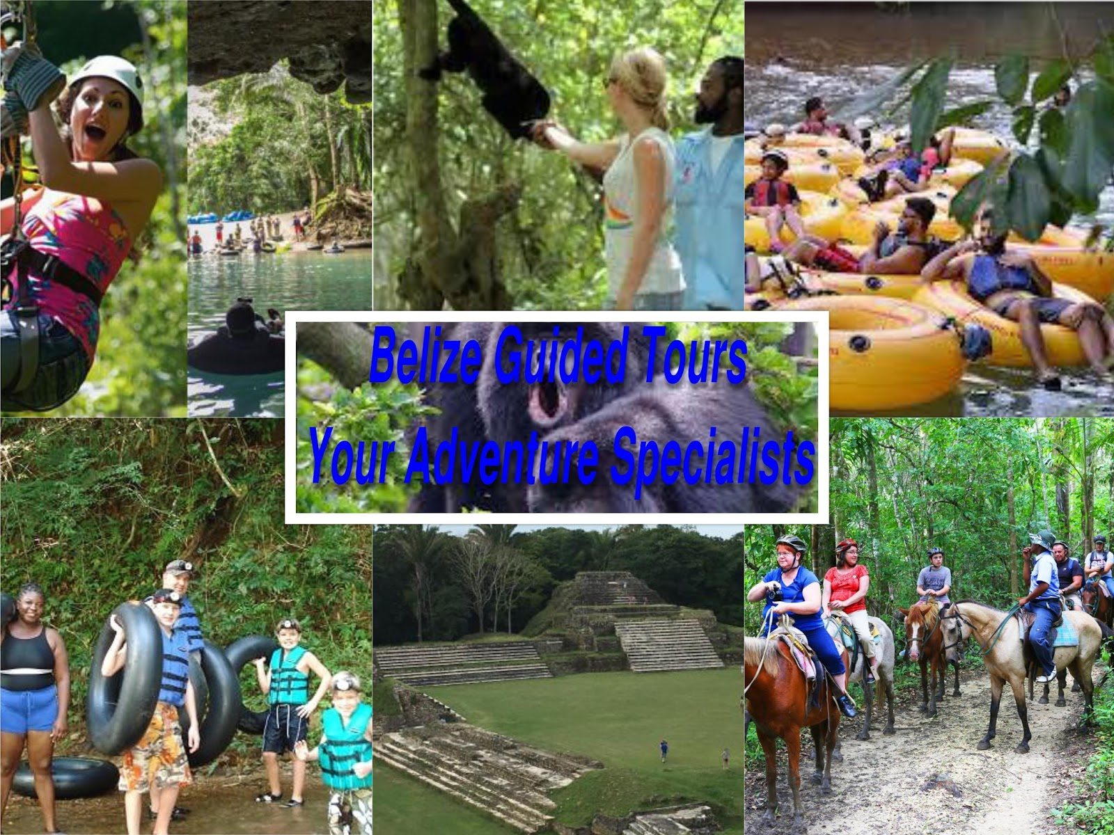 Most Inspiring   Wallpaper Horse Collage - a1guidedtoursbelize  Perfect Image Reference_182071.jpg
