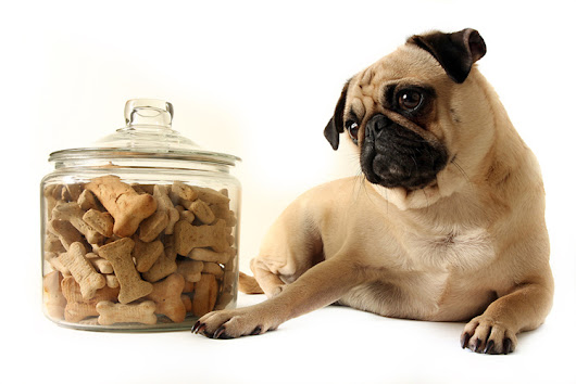 Wheat Free Dog Biscuits Recipe