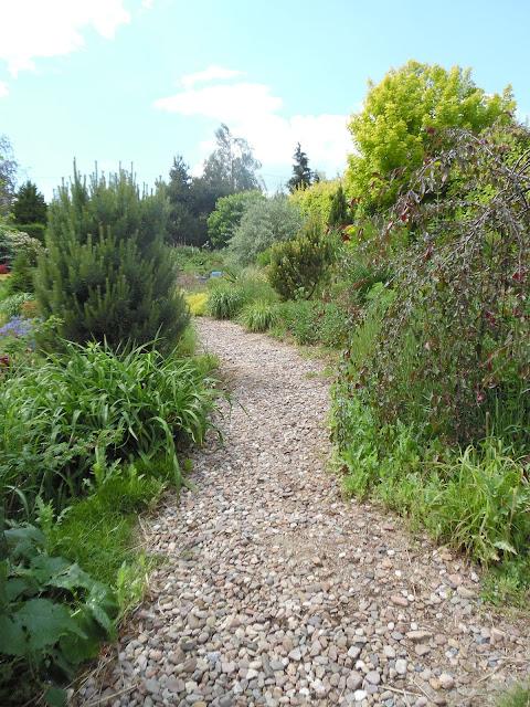 żwirowa ścieżka w ogrodzie