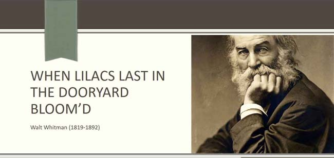 an analysis of when lilacs last in the dooryard bloomd by walt whitman