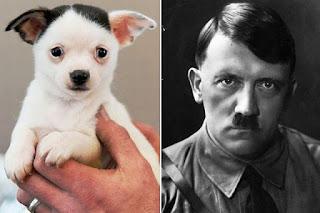 Aneh! Ada Wajah Adolf Hitler di Telinga Seekor Anjing