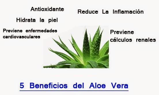 El aloe vera ayuda para el acne celulitis y mucho mas - Como es la planta de aloe vera ...