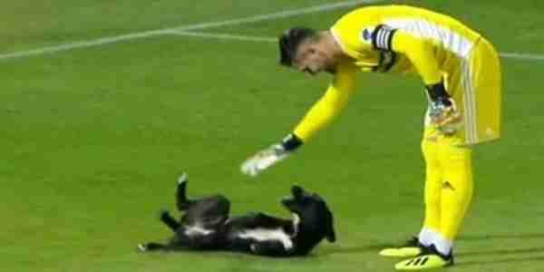 بالفيديو كلب يوقف المباراة ، مباريات الدوري الروسي ، لاعب يخرج كلب من الملعب