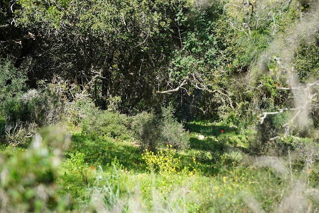 צמחייה בשמורת אלוני אבא
