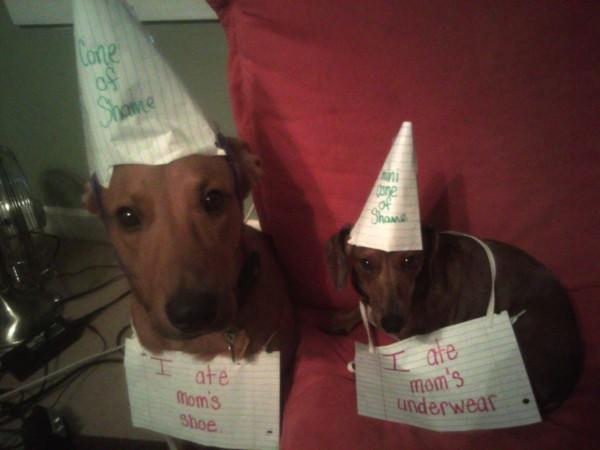 Cute Dogs Sayings