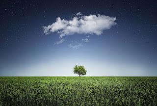 niebo, drzewo