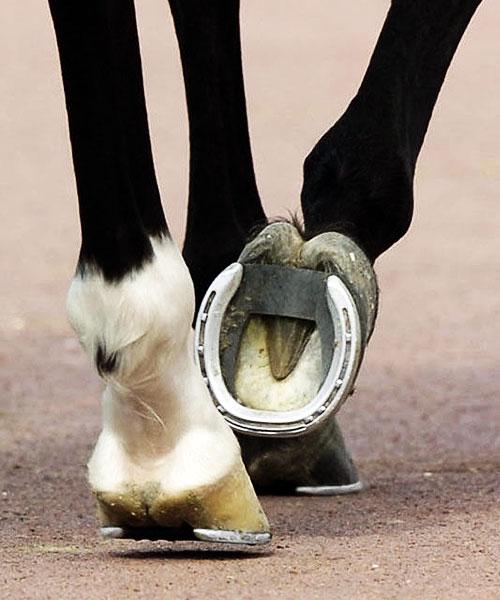 at ayağındaki nal ile ilgili görsel sonucu