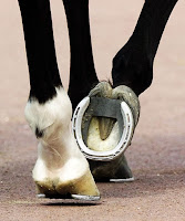 Bir atın ayağında çakılı olan nal