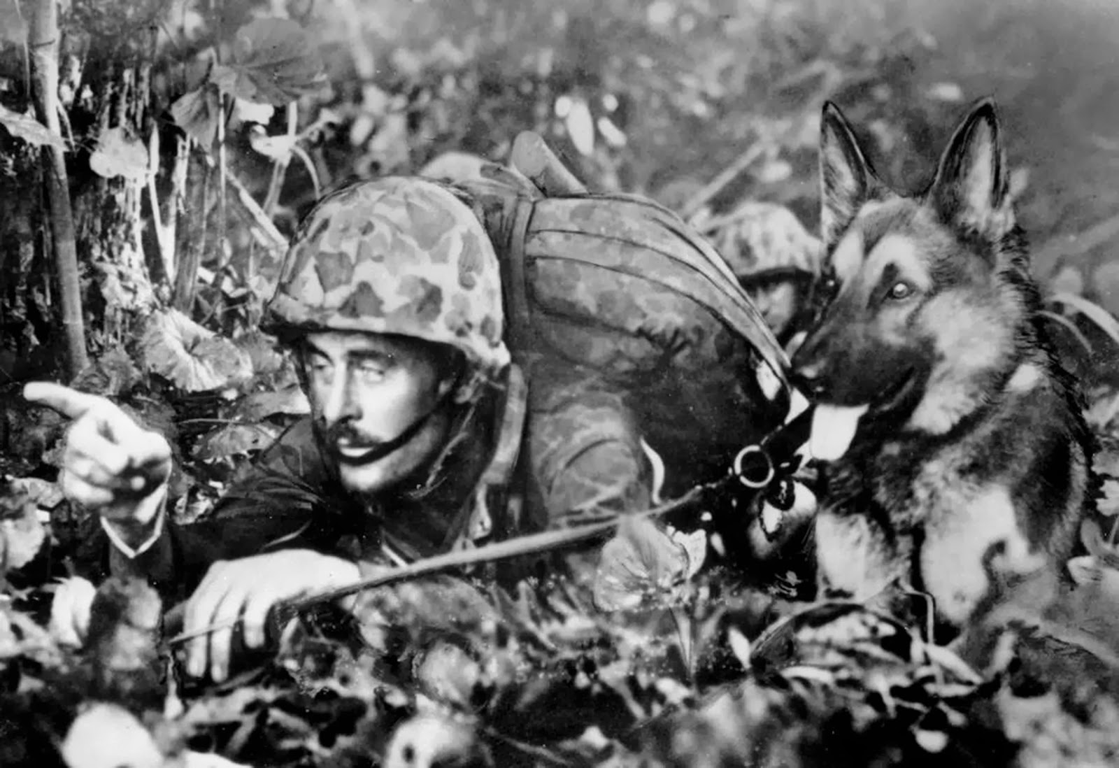 World War II Pictures In Details: Marine War Dog and Handler