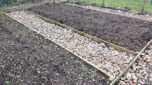starting a cut flower patch at the allotment