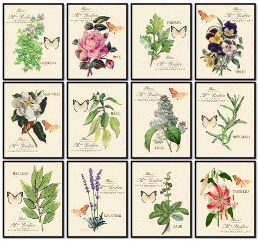 Art, Etsy, Flowers, Herbs, Butterflies