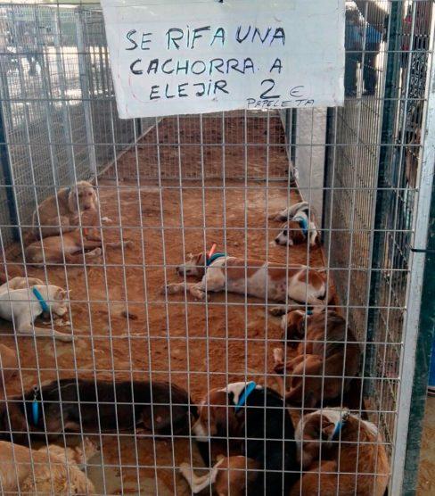 """Se rifa cachorra a """"elejir"""" con papeletas a 2 euros"""