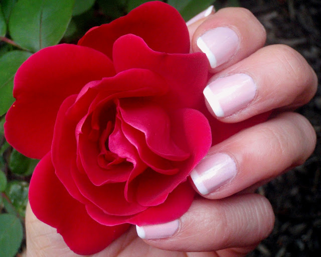 french manicure with red rose