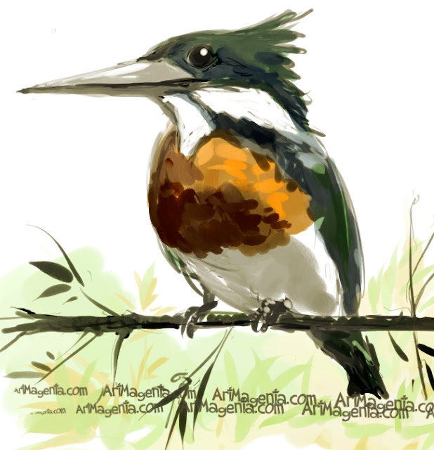 Amazon Kingfisher sketch painting. Bird art drawing by illustrator Artmagenta