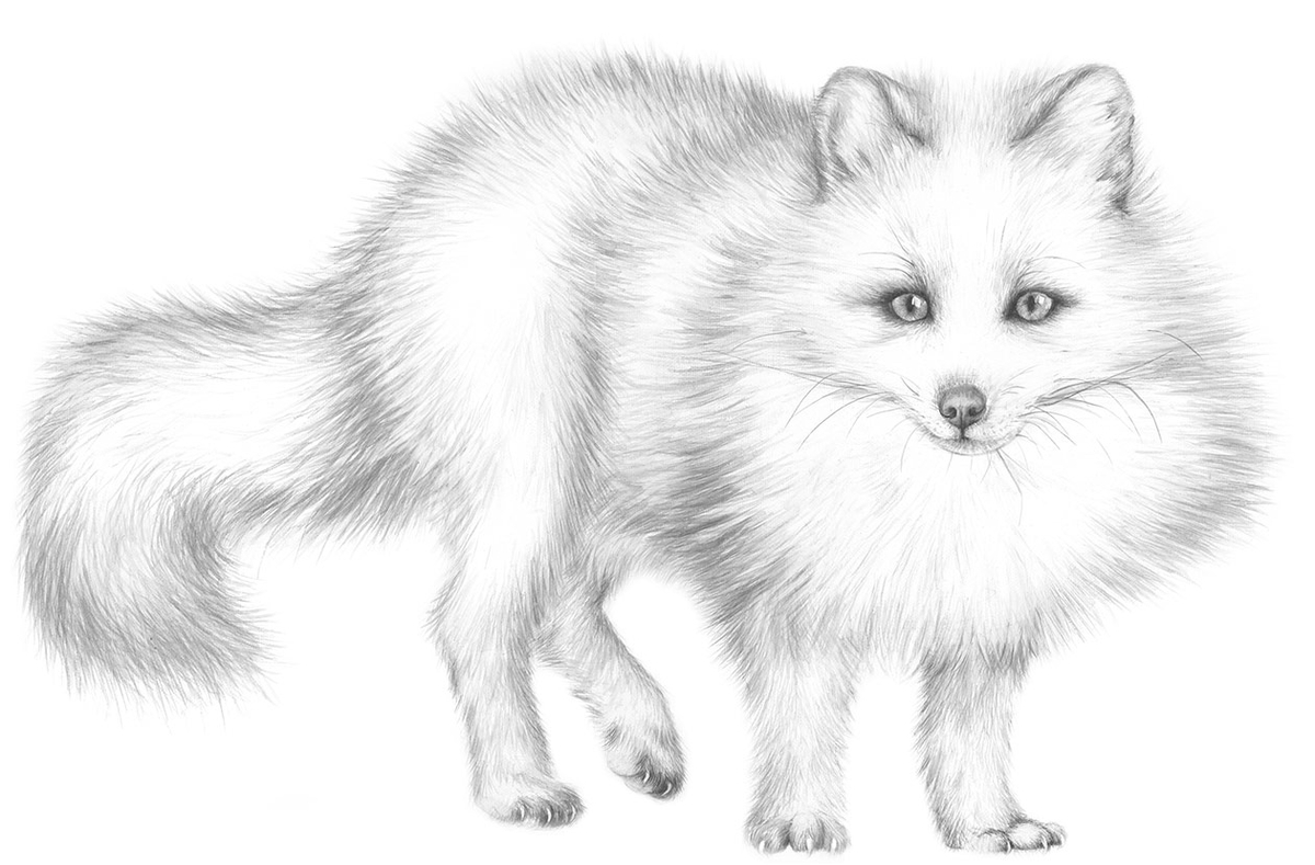 01-Arctic-Fox-White-Chameleon-Jaimee-Paul-Mixed-Media-Animal-Drawings-and-Paintings-www-designstack-co